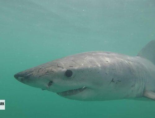 Gansbaai's Marine Wildlife