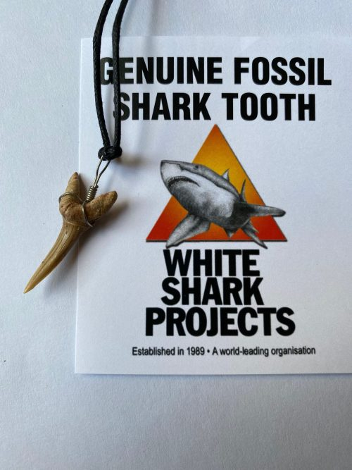 Tiger-Shark Teeth small